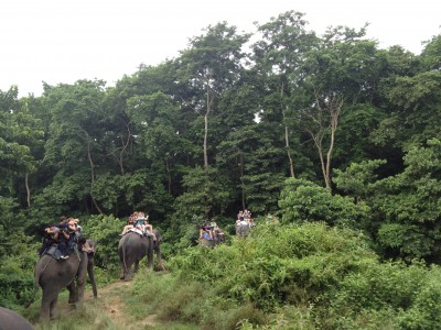 Jungle Safari Tour in Nepal